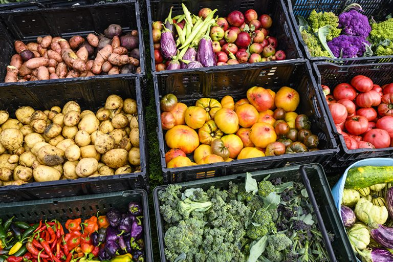 An image of fresh produce from UW-Madison's F.H. King Students for Sustainable Agriculture farm plot